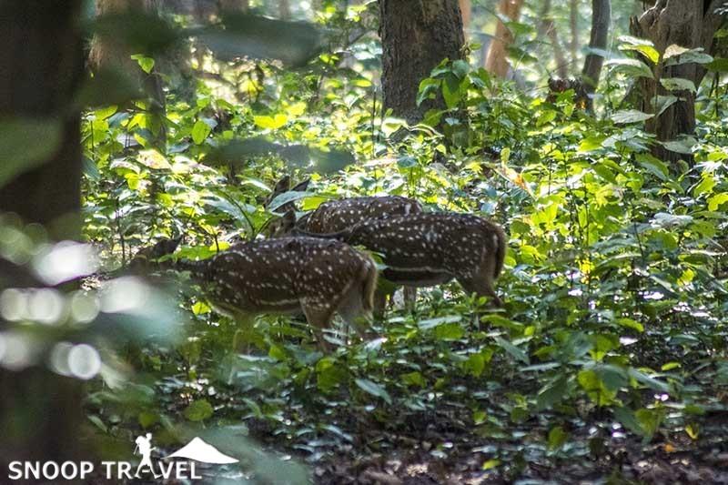 images of Jim Corbet Tiger Nation Park